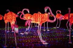 Noche china del arte del color de la demostración de la linterna del flamenco imagen de archivo