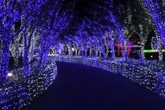 Noche de Corea del festival de la iluminación de la luz de Illumia Fotos de archivo libres de regalías