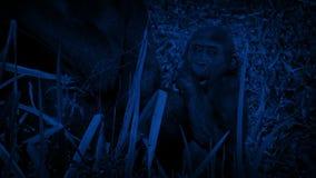 Noche de Gorilla Eating By Mother At del bebé almacen de metraje de vídeo