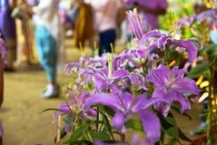 Noche de la flor del lirio en Tailandia Fotos de archivo