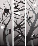 Noche de la selva Imagen de archivo libre de regalías