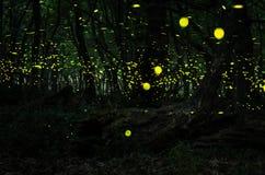 Noche de las luciérnagas en el bosque con las luciérnagas Fotografía de archivo libre de regalías