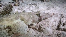 Noche de los pescados del cocodrilo en la comida de la búsqueda del Mar Rojo del filón almacen de metraje de vídeo