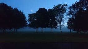 Noche de niebla con la luna a través de árboles en campo Fotos de archivo