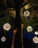 Noche de verano debajo del árbol Foto de archivo libre de regalías
