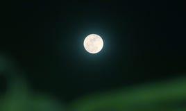 Noche del claro de luna y sombra del ` s del árbol Imagen de archivo libre de regalías