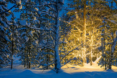 Noche del invierno en bosque y luces que brillan intensamente del árbol de navidad Fotos de archivo