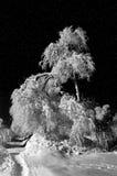Noche del invierno y árbol escarchado Fotografía de archivo libre de regalías