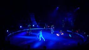 Noche en el circo almacen de video