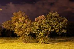Noche en el parque Foto de archivo libre de regalías