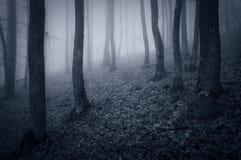 Noche en un bosque oscuro con los árboles del canal de la niebla Foto de archivo
