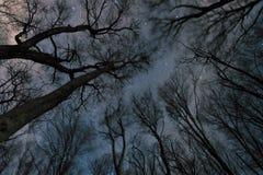 Noche estrellada hermosa, la vía láctea y los árboles, noche ventosa foto de archivo
