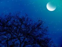 Noche estrellada iluminada por la luna imagen de archivo libre de regalías