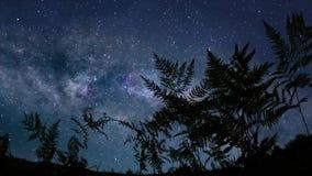 Noche estrellada tranquila almacen de video