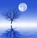 Noche iluminada por la luna fría Fotografía de archivo libre de regalías
