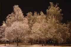 Noche, invierno, paisaje urbano Árboles en la nieve fotografía de archivo libre de regalías