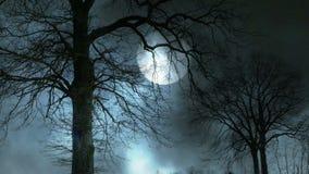 Noche mística de la luna Silueta fantasmagórica del árbol almacen de metraje de vídeo