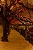 Noche Praga, parque Fotos de archivo libres de regalías