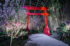 Noche Sakura Fotos de archivo libres de regalías