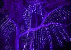 Noche tirada de las luces púrpuras que cuelgan de un árbol grande fotos de archivo