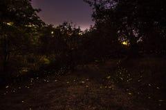 Noche y luciérnagas fotos de archivo libres de regalías