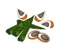 Noci di betel e foglie mature del betel su Backgrou bianco Fotografia Stock