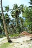 Noci di cocco Immagini Stock Libere da Diritti