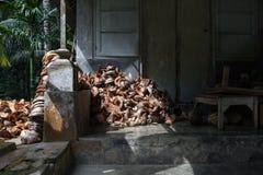 Noci di cocco in Bali Fotografia Stock Libera da Diritti