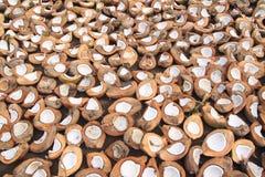 Noci di cocco che si asciugano sul sole in Indonesia Fotografia Stock Libera da Diritti