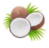 Noci di cocco con i fogli Immagine Stock Libera da Diritti