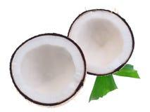 Noci di cocco con le foglie su un fondo bianco Immagini Stock Libere da Diritti