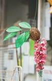Noci di cocco decorative con i fiori Immagini Stock Libere da Diritti