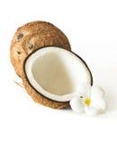 Noci di cocco e fiore Immagine Stock Libera da Diritti