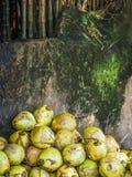 Noci di cocco fresche contro una parete con bambù Immagini Stock