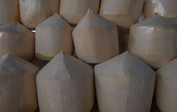 Noci di cocco fresche di file nel mercato Noce di cocco fresca della frutta tropicale nel mercato Fotografia Stock