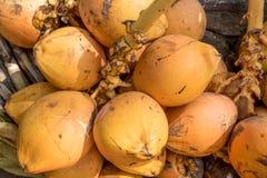 Noci di cocco gialle ed arancio Immagine Stock