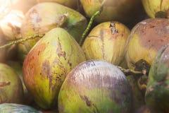Noci di cocco gialle tropicali fotografie stock libere da diritti