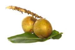 Noci di cocco isolate su fondo bianco Immagini Stock Libere da Diritti