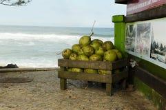 Noci di cocco nel Brasile Fotografie Stock Libere da Diritti