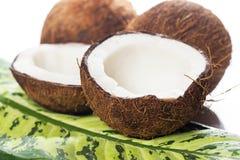 Noci di cocco su fondo bianco Immagine Stock Libera da Diritti