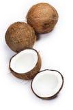 Noci di cocco su fondo bianco Immagine Stock