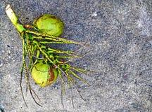 Noci di cocco sul pavimento sporco del cemento Immagini Stock