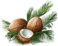 Noci di cocco sull'foglie di palma Immagini Stock Libere da Diritti