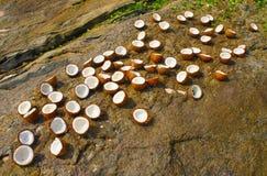 Noci di cocco sulla pietra. Fotografia Stock