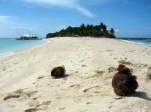 Noci di cocco sulla spiaggia Fotografia Stock