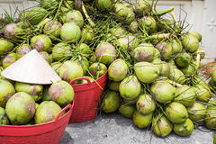 Noci di cocco tenere Immagine Stock Libera da Diritti