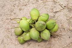 Noci di cocco verdi Fotografia Stock