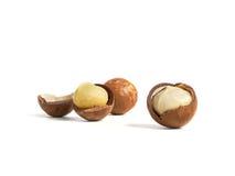 Noci di macadamia Fotografia Stock