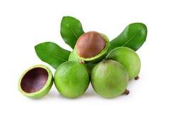 Noci di macadamia con le foglie verdi della noce di macadamia isolate sul BAC bianco immagini stock
