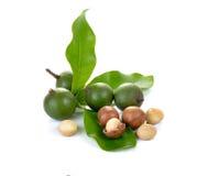 Noci di macadamia su bianco Fotografie Stock